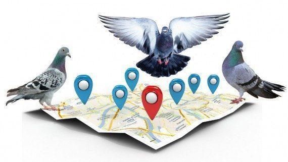 الگوریتم کبوتر گوگل ترفندی برای جستجوی مکانی